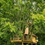 photo of treehouse and surrounding tree foliage