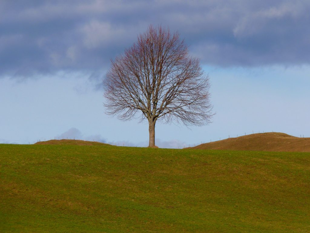 single tree with no leaves on top of a hill